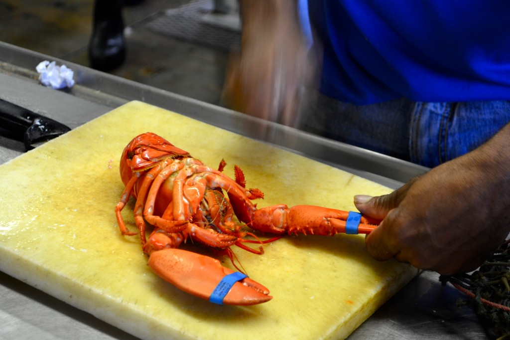 Bonjour + Hola › Maine-Ing About: Lobster Living